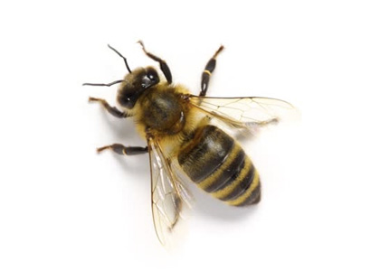 orlando bee removal and beekeeping bee serious bee removal