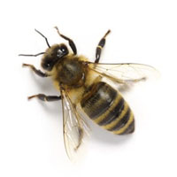 Bee Removal Services Florida
