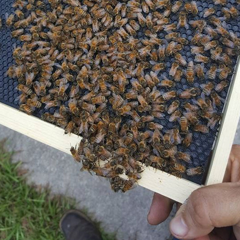 Removing Bee Swarm