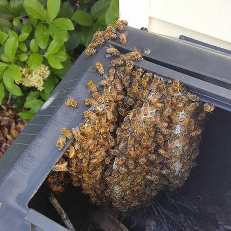 bee hive in yard
