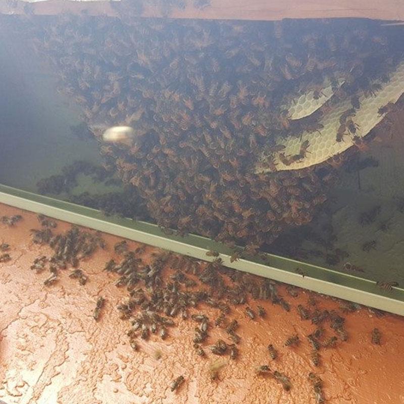 winter park bee infestation