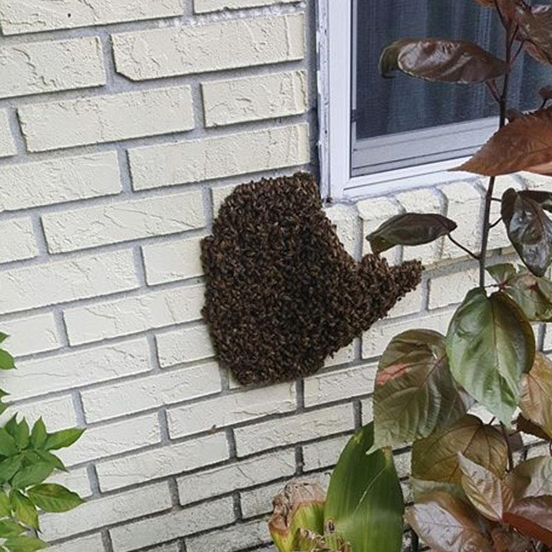 bee swarm conway florida