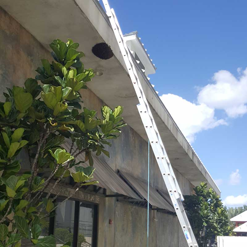 bee swarm removal services highlands county