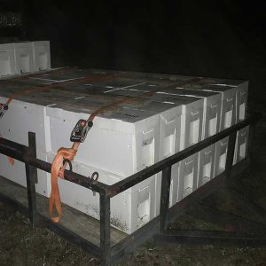 delivery and install bee nucs