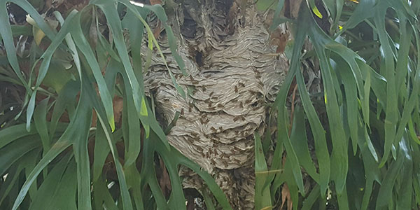 wasp-swarm-removal