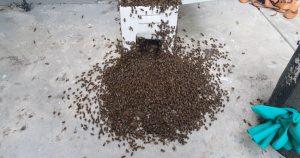 bee swarm removal orlando
