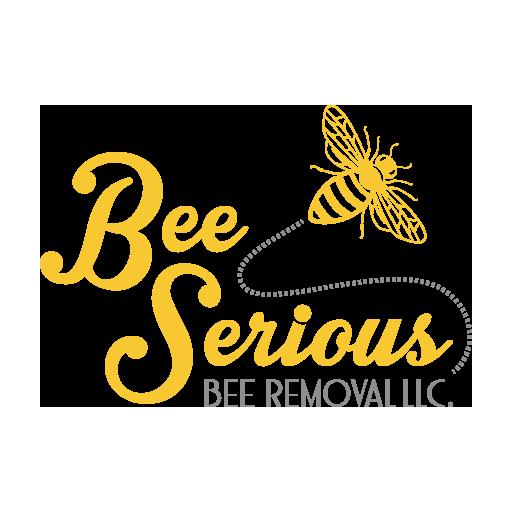 8 Ways to get rid of Carpenter Bees