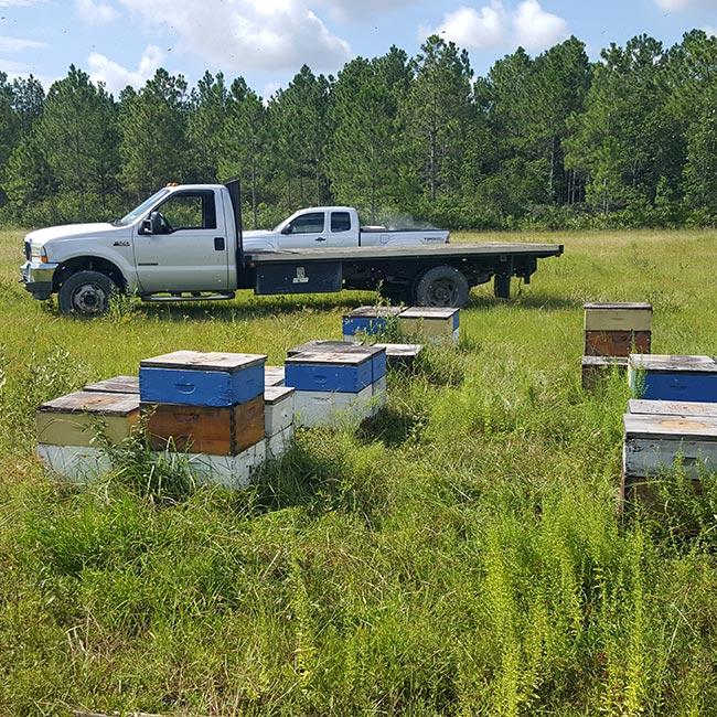 Ft. Myers Beekeepers