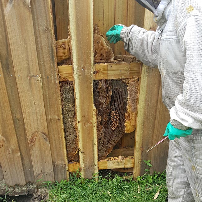 Residential Bee Removal