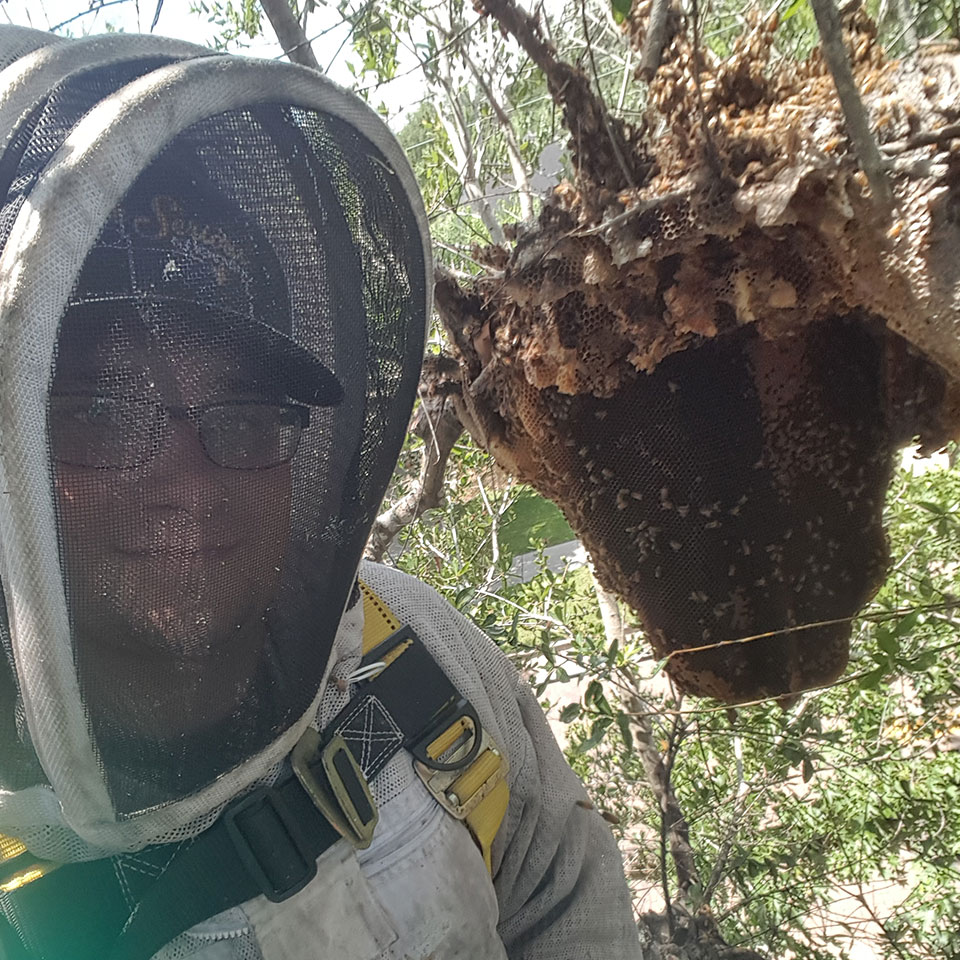 Orlando S Trusted Bee Removal Professionals Bee Serious Llc